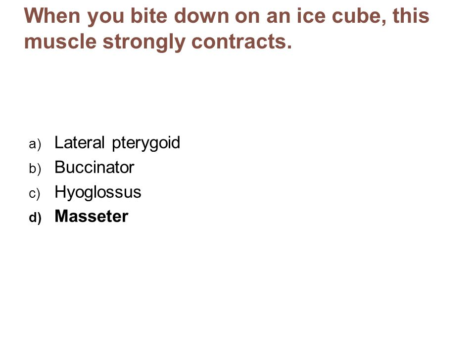 When you bite down on an ice cube, this muscle strongly contracts. a) Lateral pterygoid b) Buccinator c) Hyoglossus d) Masseter