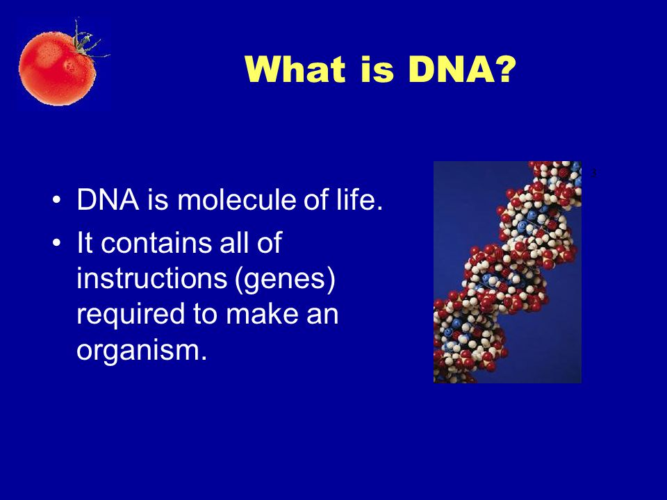 What is DNA? DNA is molecule of life. It contains all of instructions (genes) required to make an organism. 3