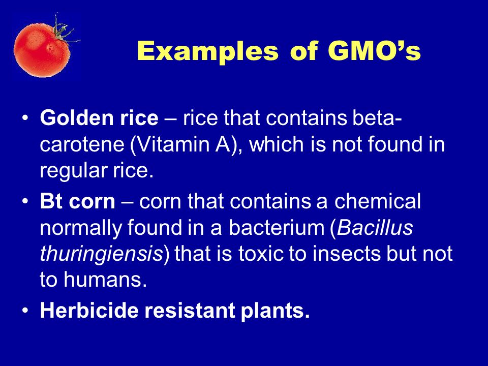 Examples of GMO's Golden rice – rice that contains beta- carotene (Vitamin A), which is not found in regular rice. Bt corn – corn that contains a chem