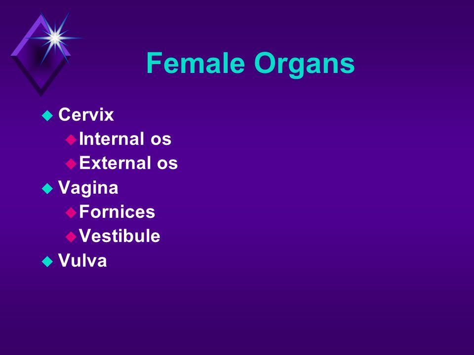 Female Organs  Cervix  Internal os  External os  Vagina  Fornices  Vestibule  Vulva