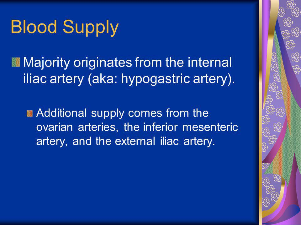 Blood Supply Majority originates from the internal iliac artery (aka: hypogastric artery). Additional supply comes from the ovarian arteries, the infe