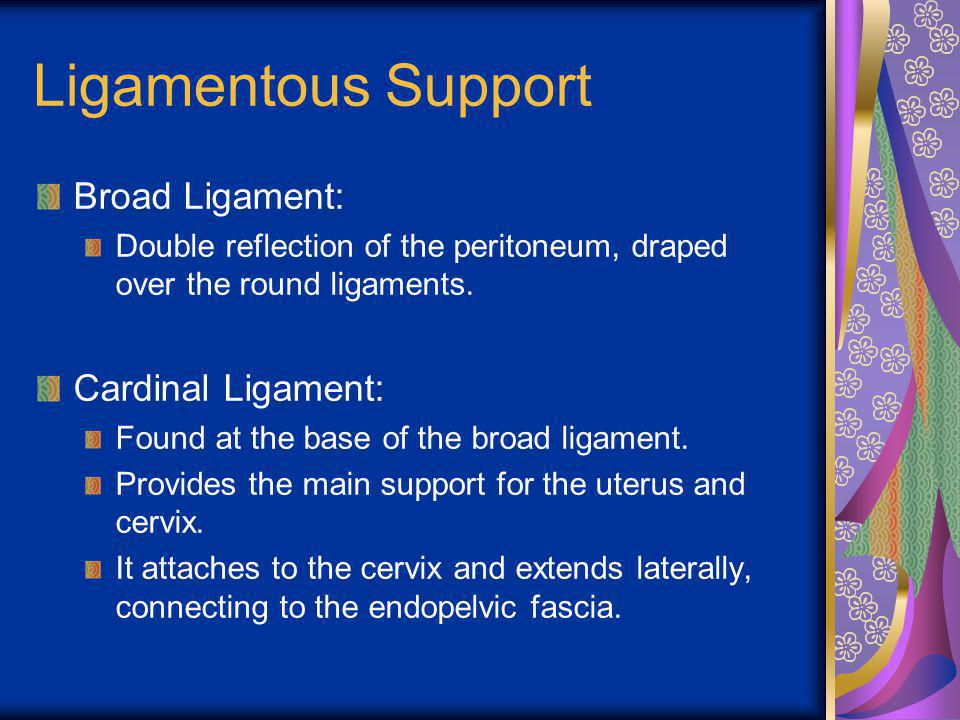 Ligamentous Support Broad Ligament: Double reflection of the peritoneum, draped over the round ligaments. Cardinal Ligament: Found at the base of the