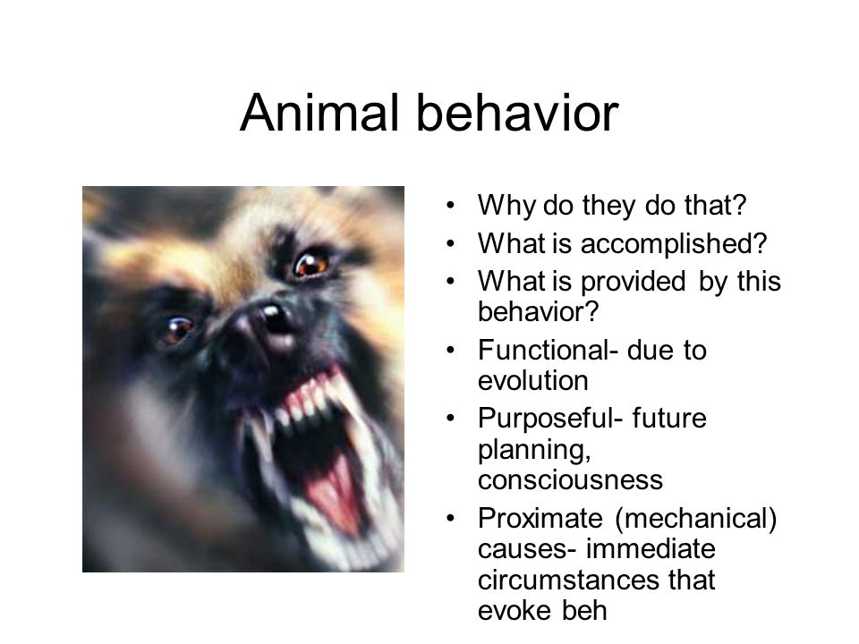 Animal behavior Why do they do that. What is accomplished.