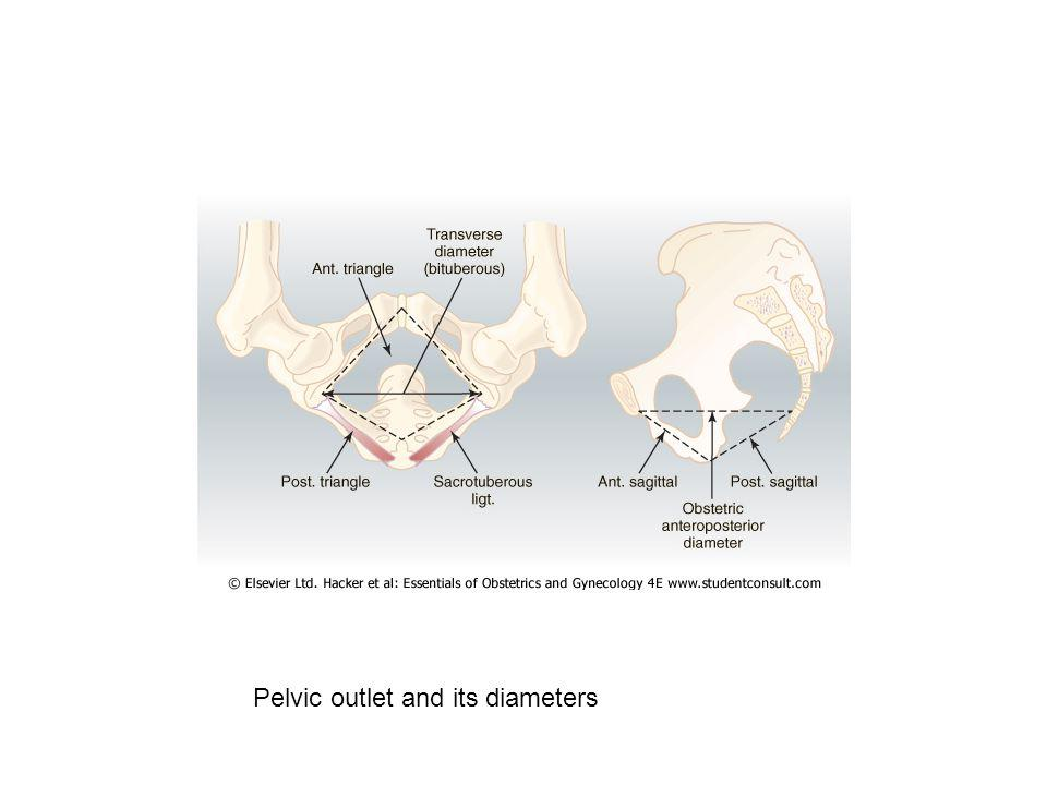 Pelvic outlet and its diameters