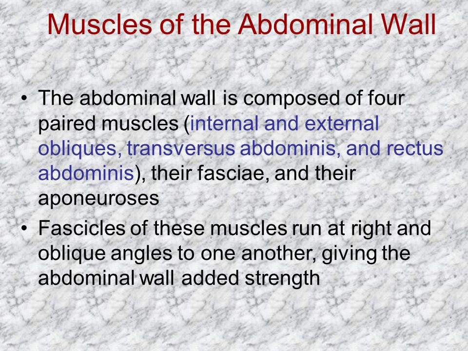 Muscles of the Abdominal Wall The abdominal wall is composed of four paired muscles (internal and external obliques, transversus abdominis, and rectus