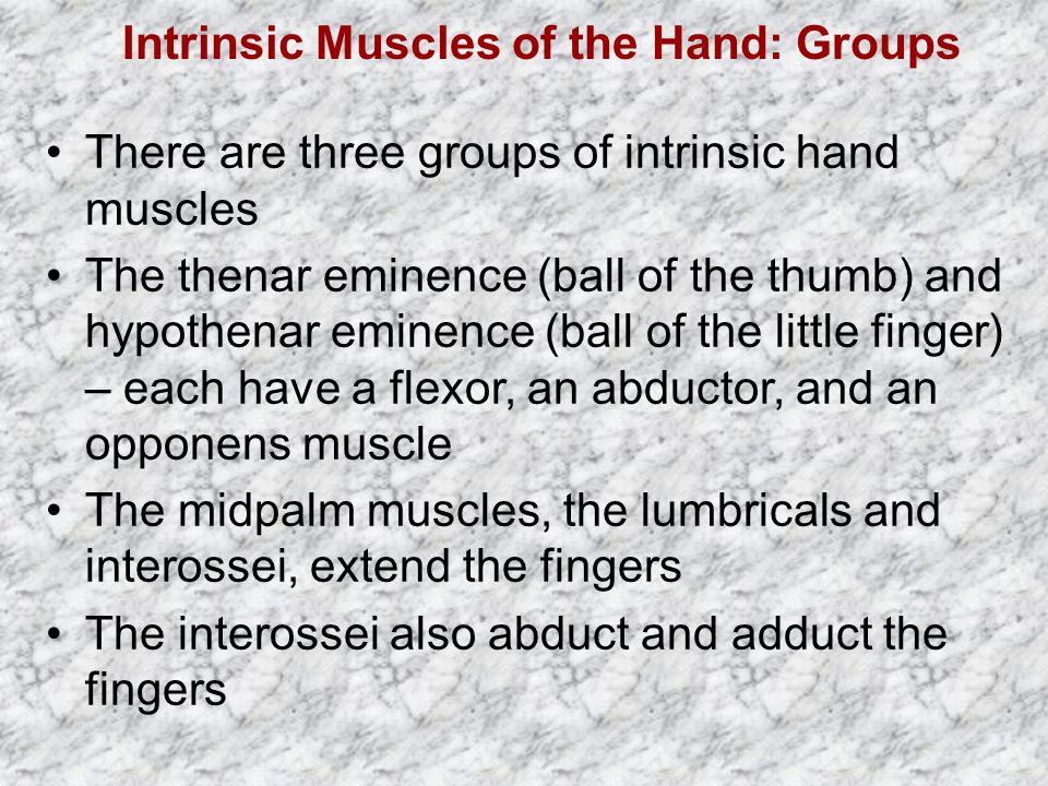 Intrinsic Muscles of the Hand: Groups There are three groups of intrinsic hand muscles The thenar eminence (ball of the thumb) and hypothenar eminence