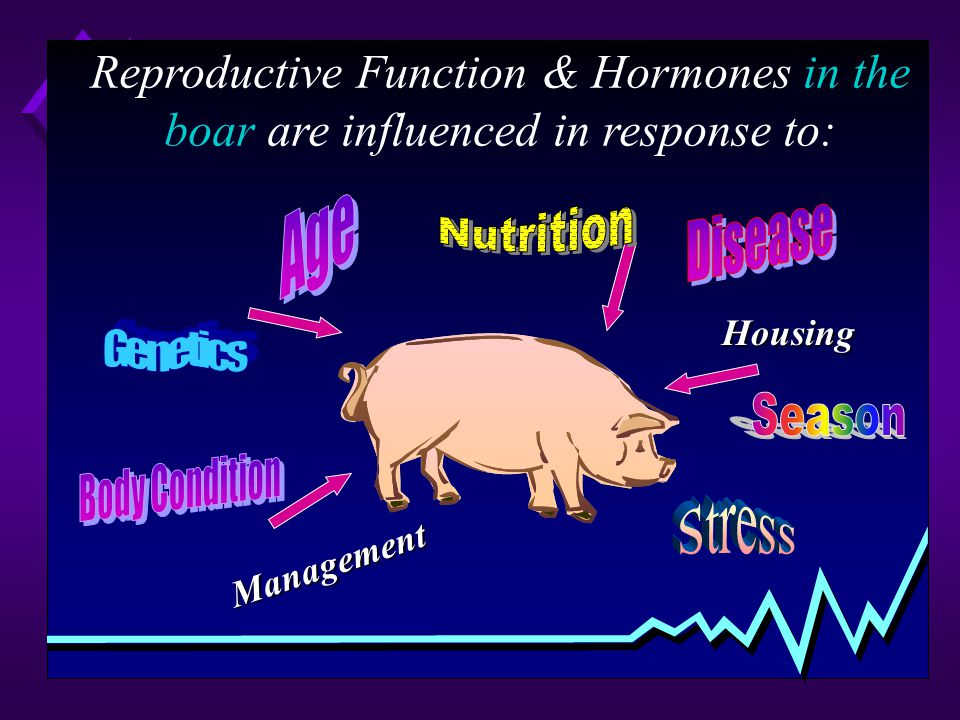 Reproductive Function & Hormones in the boar are influenced in response to: Housing Management