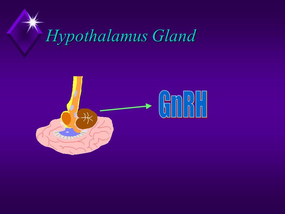 Hypothalamus Gland