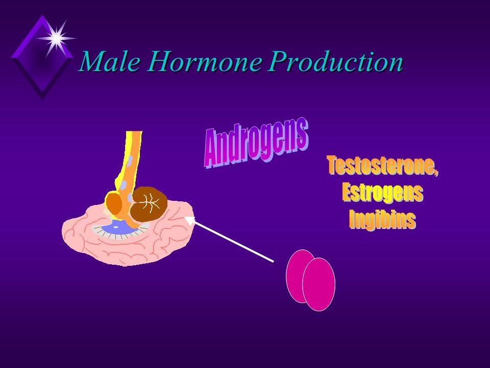 Male Hormone Production