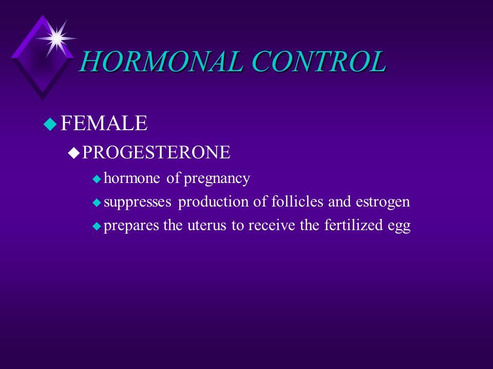HORMONAL CONTROL u FEMALE u PROGESTERONE u hormone of pregnancy u suppresses production of follicles and estrogen u prepares the uterus to receive the