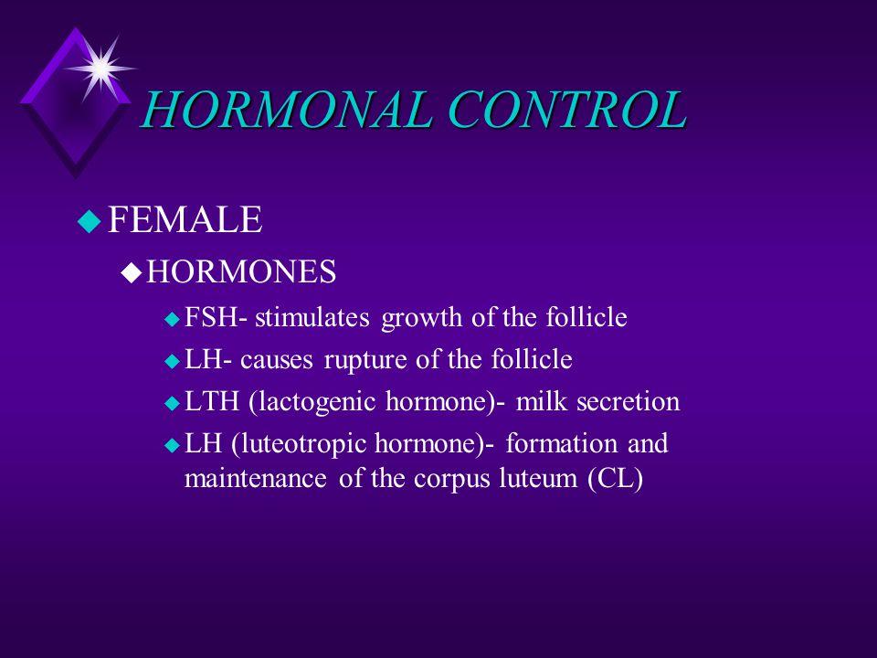HORMONAL CONTROL u FEMALE u HORMONES u FSH- stimulates growth of the follicle u LH- causes rupture of the follicle u LTH (lactogenic hormone)- milk se