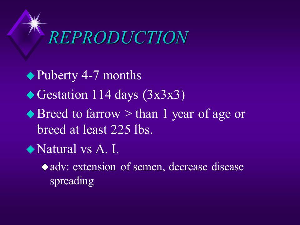 REPRODUCTION u Puberty 4-7 months u Gestation 114 days (3x3x3) u Breed to farrow > than 1 year of age or breed at least 225 lbs. u Natural vs A. I. u