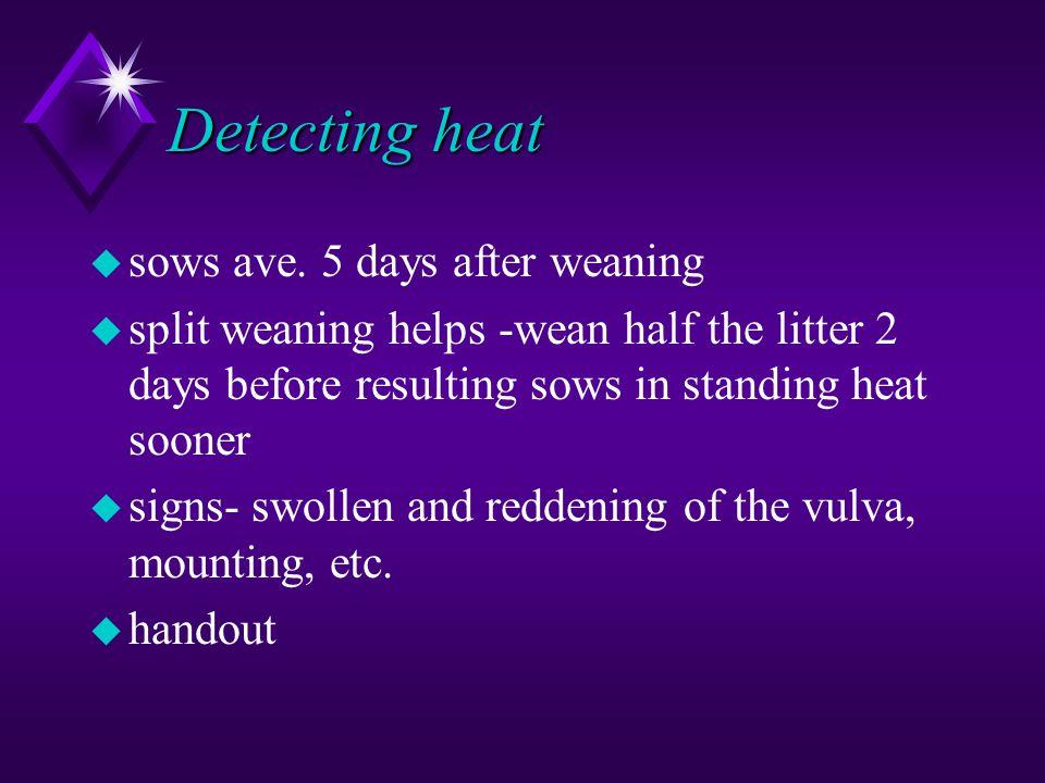 Detecting heat u sows ave. 5 days after weaning u split weaning helps -wean half the litter 2 days before resulting sows in standing heat sooner u sig