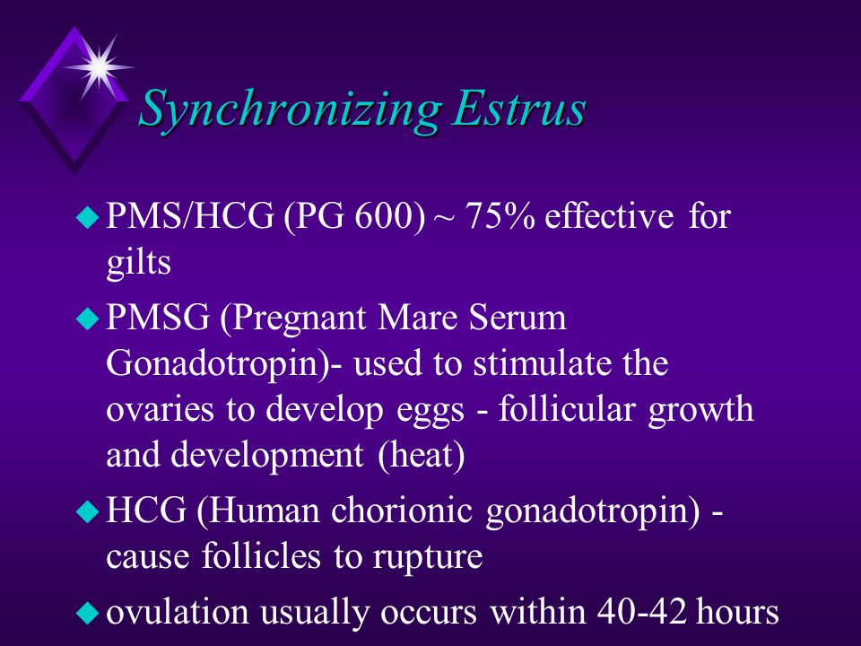 Synchronizing Estrus u PMS/HCG (PG 600) ~ 75% effective for gilts u PMSG (Pregnant Mare Serum Gonadotropin)- used to stimulate the ovaries to develop