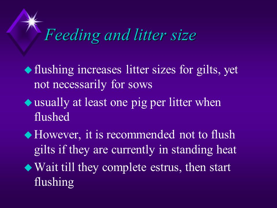 Feeding and litter size u flushing increases litter sizes for gilts, yet not necessarily for sows u usually at least one pig per litter when flushed u