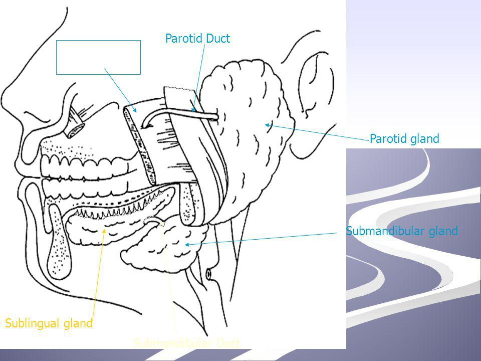 Parotid gland Submandibular gland Sublingual gland Parotid Duct Submandibular Duct Masseter muscle