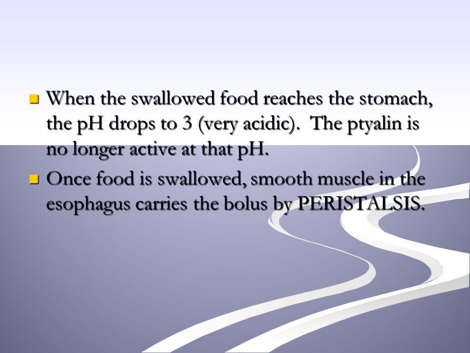 When the swallowed food reaches the stomach, the pH drops to 3 (very acidic). The ptyalin is no longer active at that pH. When the swallowed food reac
