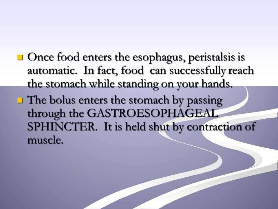 Once food enters the esophagus, peristalsis is automatic. In fact, food can successfully reach the stomach while standing on your hands. Once food ent
