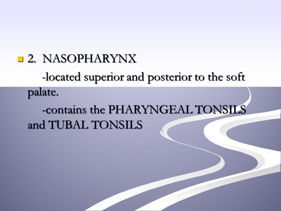 2. NASOPHARYNX 2. NASOPHARYNX -located superior and posterior to the soft palate. -located superior and posterior to the soft palate. -contains the PH