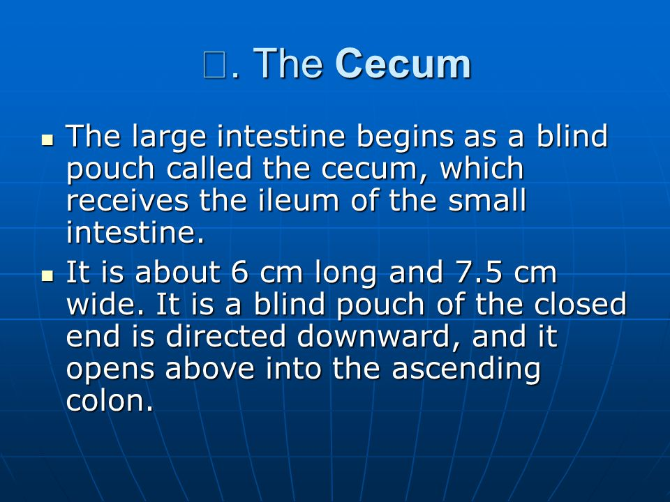 Ⅰ. The Cecum The large intestine begins as a blind pouch called the cecum, which receives the ileum of the small intestine. The large intestine begins
