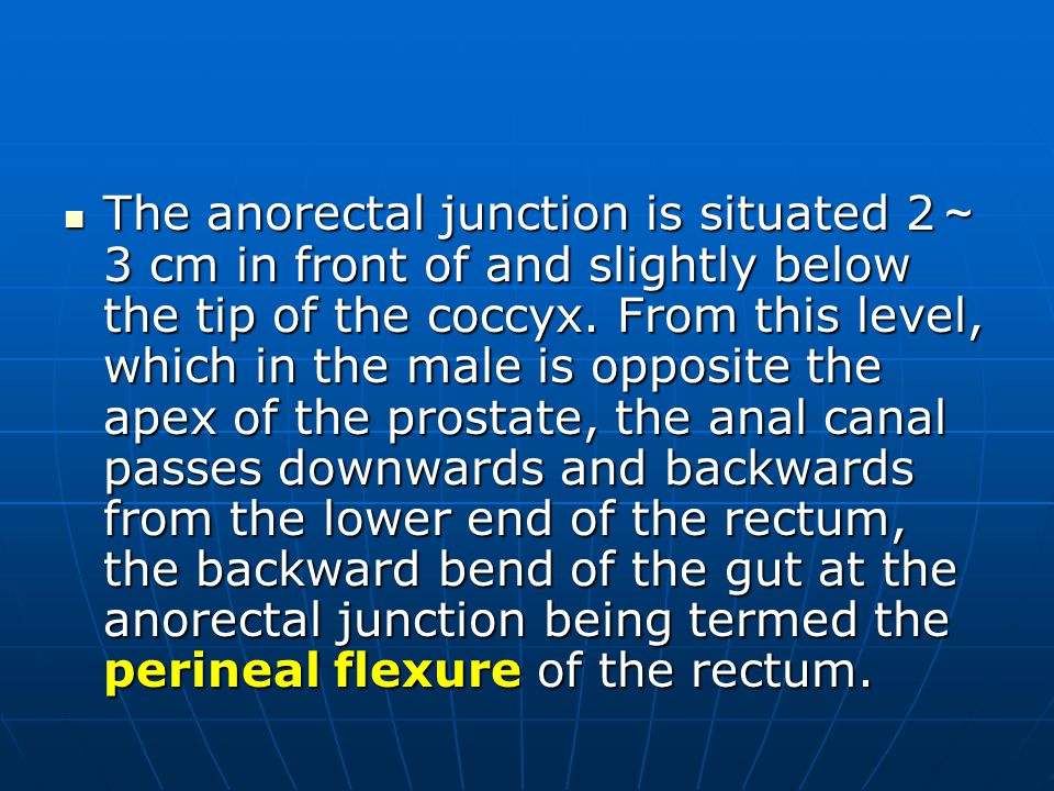 The anorectal junction is situated 2 ~ 3 cm in front of and slightly below the tip of the coccyx. From this level, which in the male is opposite the a