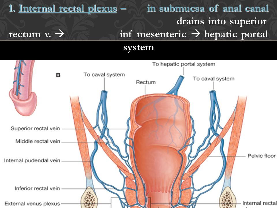 1. Internal rectal plexus –in submucsa of anal canal 1. Internal rectal plexus –in submucsa of anal canal drains into superior rectum v.  inf mesente