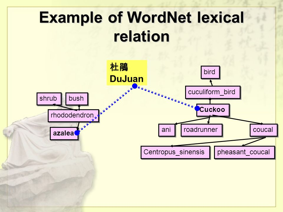 Example of WordNet lexical relation Cuckoo cuculiform_bird ani roadrunner coucal bird pheasant_coucal Centropus_sinensis azalea rhododendron shrub bush 杜鵑 DuJuan