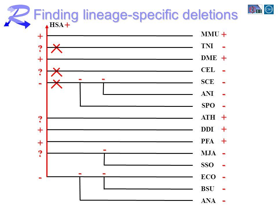 HSA MMU ANA BSU ECO SSO MJA PFA DDI ATH ANI SPO SCE CEL DME TNI Finding lineage-specific deletions ++- + - - - + + + - - - - - - ++ .