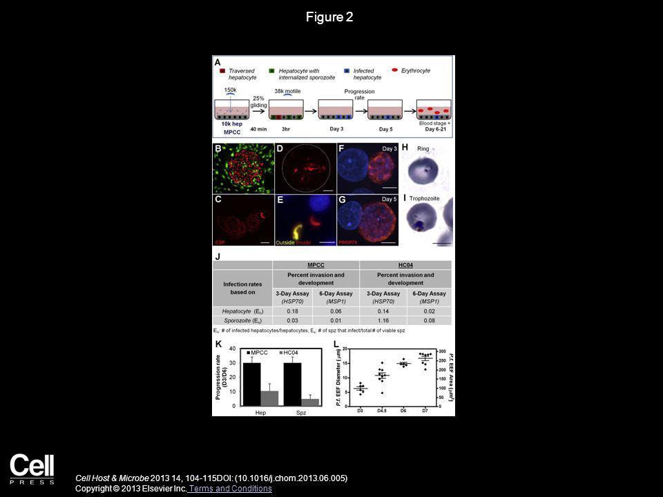 Figure 2 Cell Host & Microbe 2013 14, 104-115DOI: (10.1016/j.chom.2013.06.005) Copyright © 2013 Elsevier Inc.