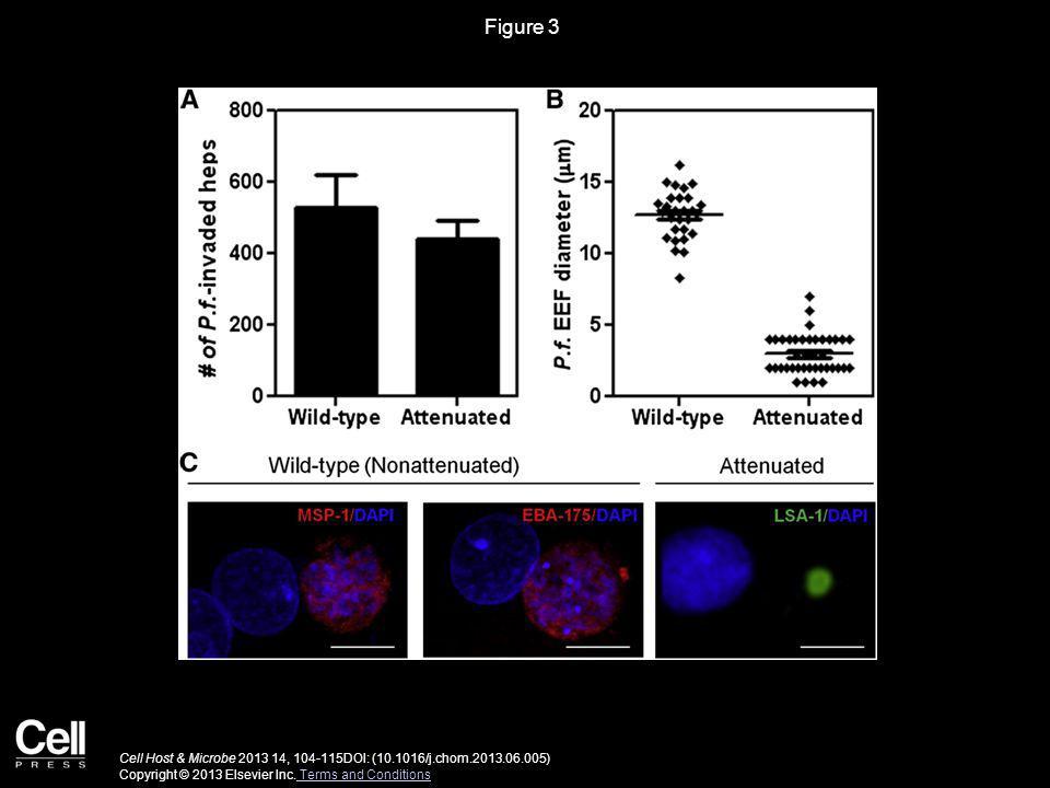 Figure 3 Cell Host & Microbe 2013 14, 104-115DOI: (10.1016/j.chom.2013.06.005) Copyright © 2013 Elsevier Inc.