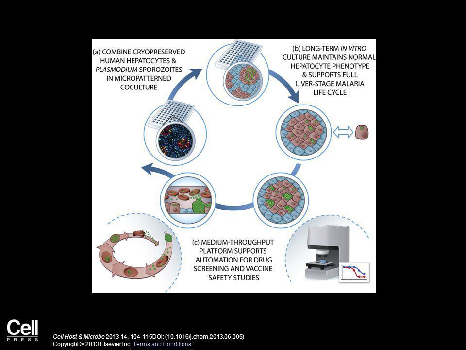 Cell Host & Microbe 2013 14, 104-115DOI: (10.1016/j.chom.2013.06.005) Copyright © 2013 Elsevier Inc.