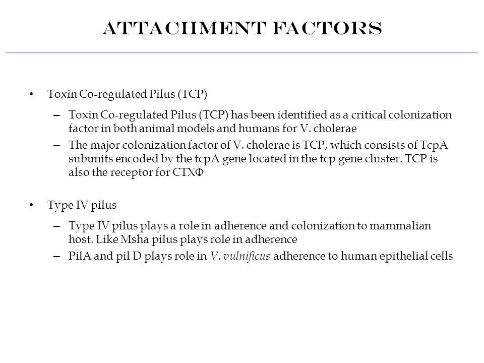 Attachment Factors Toxin Co-regulated Pilus (TCP) – Toxin Co-regulated Pilus (TCP) has been identified as a critical colonization factor in both animal models and humans for V.
