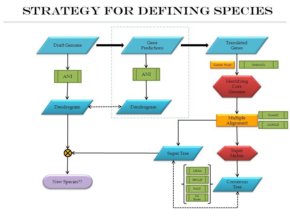 Draft Genome Gene Predictions Translated Genes ANI Dendrogram Identifying Core Genome OrthoMCL Custom Script Multiple Alignment Super Tree Super Matrix Super Matrix Consensus Tree Strategy for Defining Species New Species?.