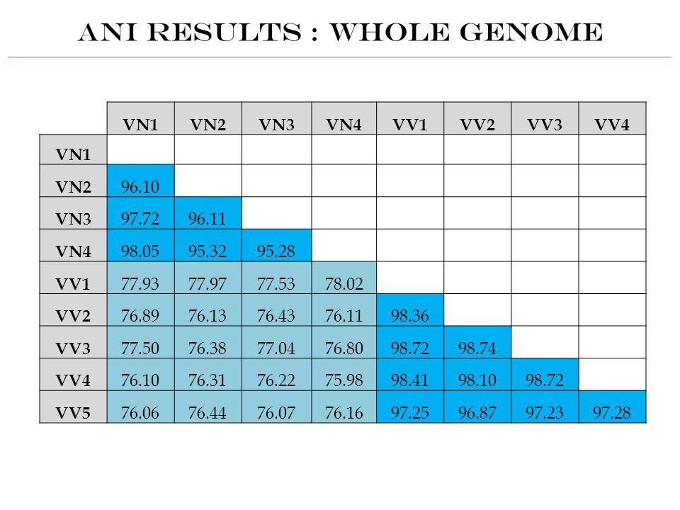 ANI Results : WHOLE GENOME VN1VN2VN3VN4VV1VV2VV3VV4 VN1 VN2 96.10 VN3 97.7296.11 VN4 98.0595.3295.28 VV1 77.9377.9777.5378.02 VV2 76.8976.1376.4376.1198.36 VV3 77.5076.3877.0476.8098.7298.74 VV4 76.1076.3176.2275.9898.4198.1098.72 VV5 76.0676.4476.0776.1697.2596.8797.2397.28