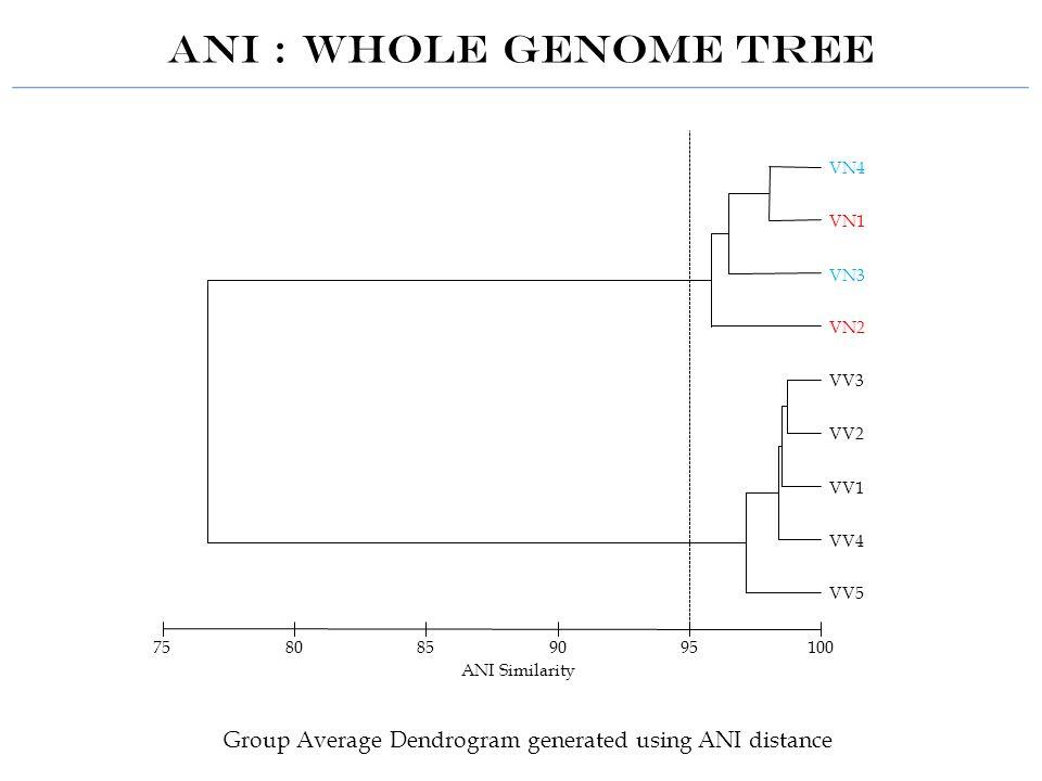 ANI : whole genome tree VV5 VV4 VV1 VV2 VV3 VN2 VN3 VN1 VN4 1009590858075 ANI Similarity Group Average Dendrogram generated using ANI distance