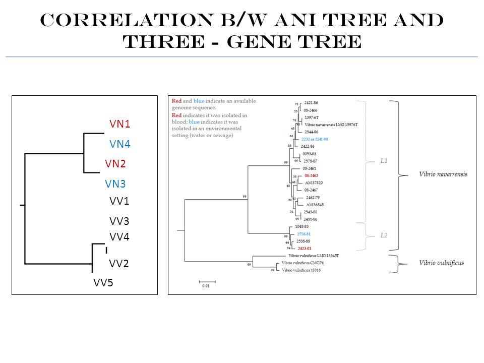 Correlation b/w ANI tree and Three - gene tree VN1 VN4 VN2 VN3 VV1 VV3 VV4 VV2 VV5
