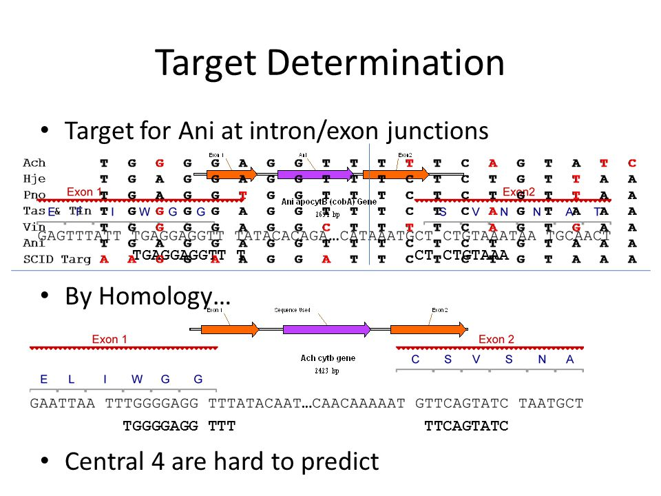 Binding Vs Ani Target & Predicted Targets Conclusion: Tas, Tin, and Vin are not producing a viable surfac-expressed HE