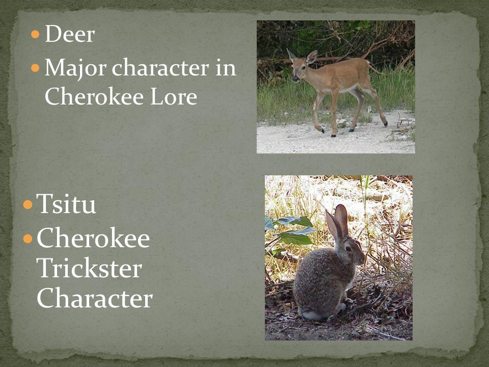 Tsitu Cherokee Trickster Character Deer Major character in Cherokee Lore