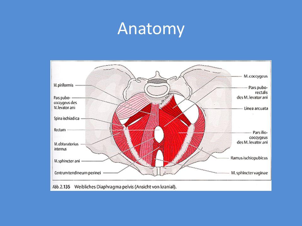 Motion Anti-lordotic exercises – Williams exercises Hip extensor strengthening