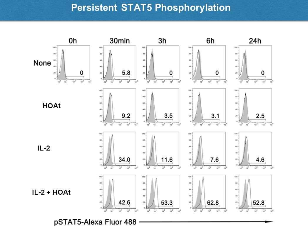 Persistent STAT5 Phosphorylation IL-2 + HOAt IL-2 HOAt