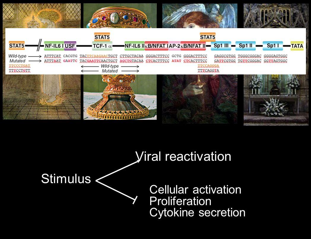 LTR gag pol vif vprenv vpu nef rev tat DHIV construct pLET-LAI (HIV-1 env expression construct) LTR tat/rev HIV-1 env HBV p(A) GFP Chemical Screen Using Tcm