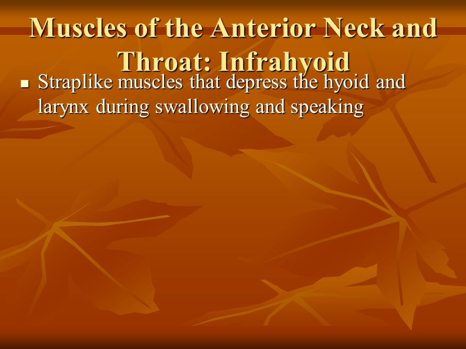 Muscles of the Anterior Neck and Throat: Infrahyoid Figure 10.8b