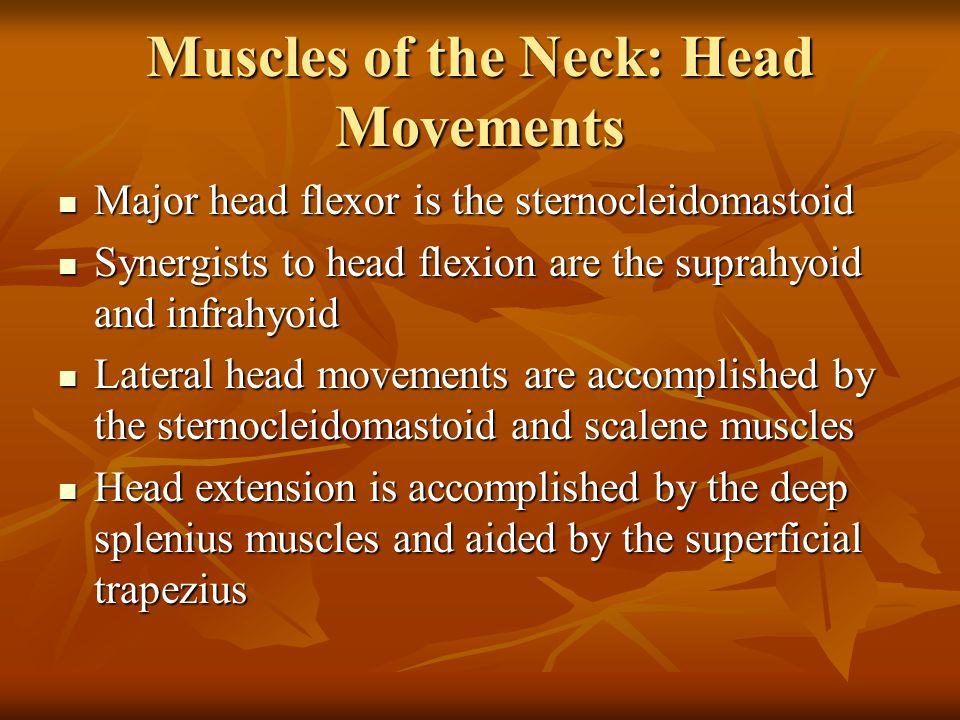 Extrinsic Shoulder Muscles Figure 10.13b