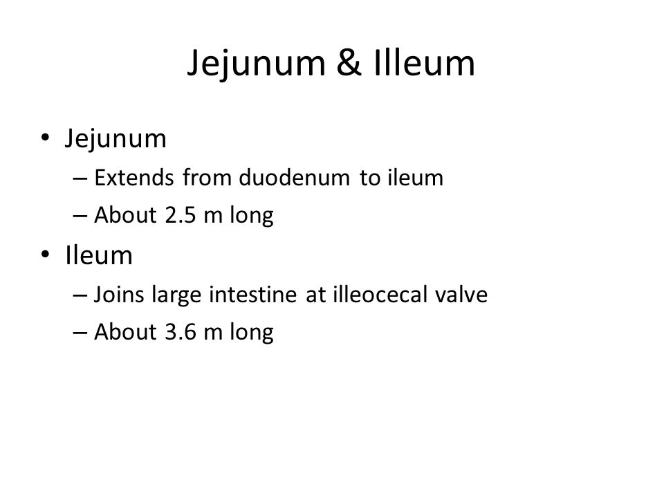 Jejunum & Illeum Jejunum – Extends from duodenum to ileum – About 2.5 m long Ileum – Joins large intestine at illeocecal valve – About 3.6 m long