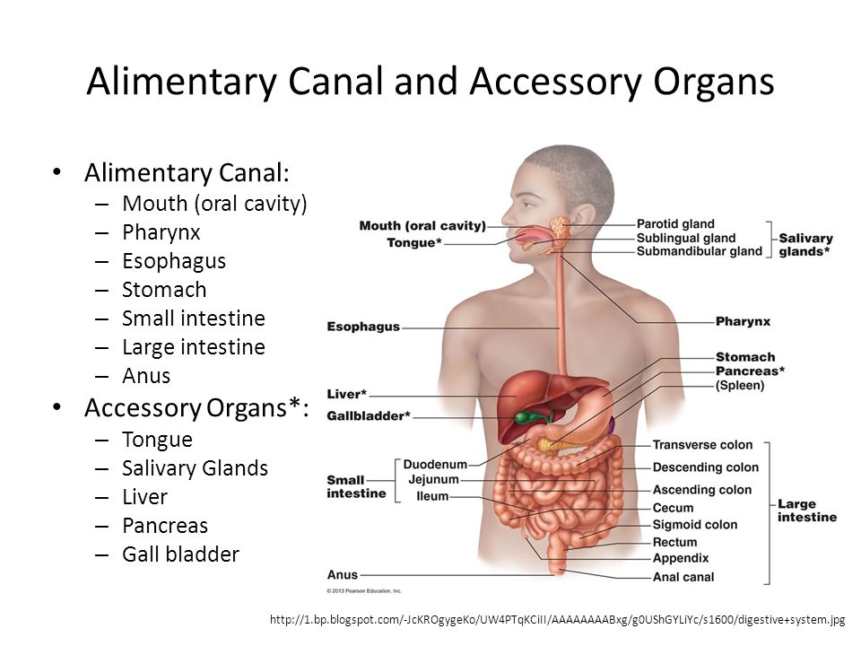 Mouth Oral (buccal) cavity – Bounded by lips, cheeks, palate, and tongue – Lined with stratified squamous epithelium Functions – Ingestion – Mechanical digestion – Chemical digestion – Propulsion