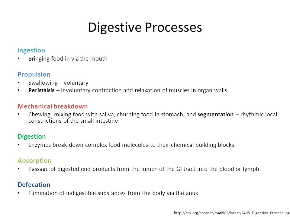 Digestive Processes Ingestion Bringing food in via the mouth Propulsion Swallowing – voluntary Peristalsis – involuntary contraction and relaxation of