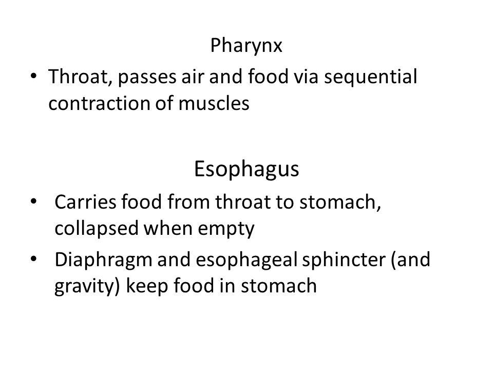 © 2013 Pearson Education, Inc.Figure 23.13 Deglutition (swallowing).