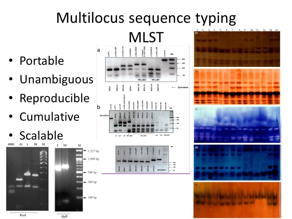 Portable Unambiguous Reproducible Cumulative Scalable Multilocus sequence typing MLST