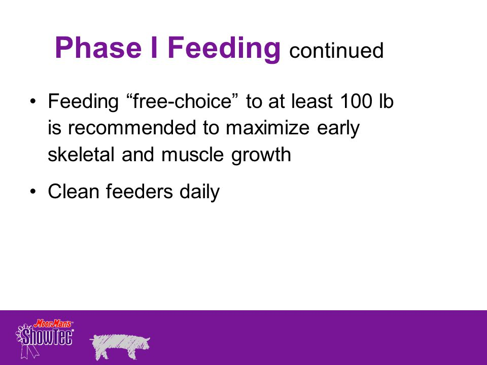 Feeding free-choice to at least 100 lb is recommended to maximize early skeletal and muscle growth Clean feeders daily Phase I Feeding continued