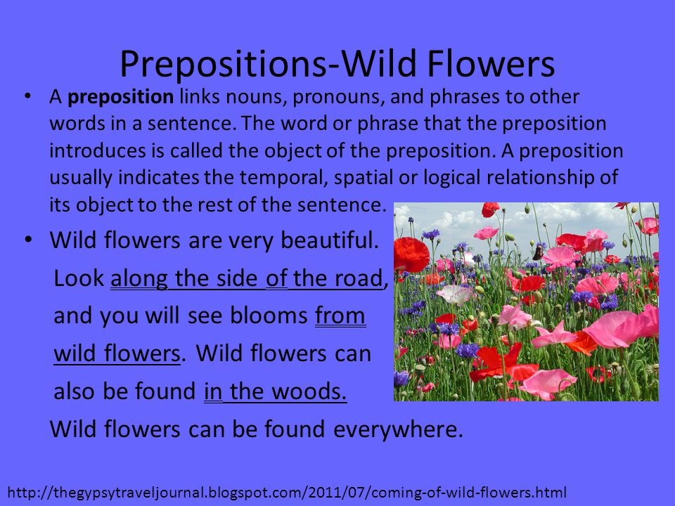 Prepositions-Wild Flowers A preposition links nouns, pronouns, and phrases to other words in a sentence.